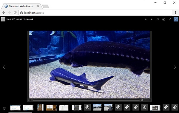 Daminion 5.5 - support for video playback in web client
