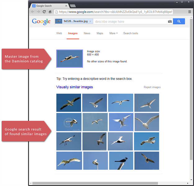 The Google search result for found similar images